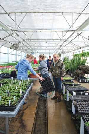 From left, sophomores Chelsey Baize, Linsey Allen and Shiley Ayers rinse trays in preparation for new plants.